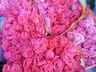 Festa da Flor de Nova Friburgo, RJ, acontece até domingo