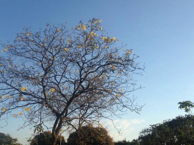 Dia ensolarado nesta terça-feira em Campo Grande com temperatura amena (Foto: Carla Salentim/G1 MS)