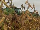 Colheita de soja e semeadura de milho avançam em Mato Grosso
