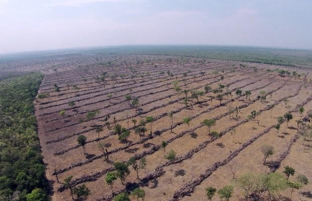 Polícia investiga desmatamento e poluição no Rio Araguaia em São Miguel do Araguaia, Goiás (Foto: Divulgação/Polícia Civil)