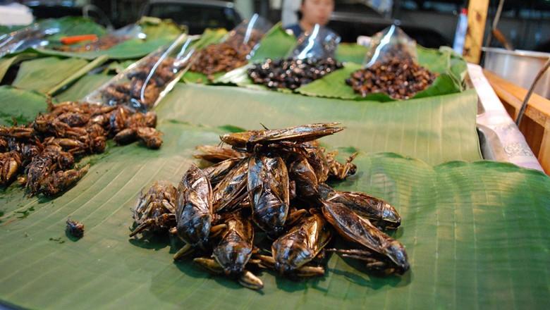 insetos-comestíveis (Foto: Alpha/CCommons)