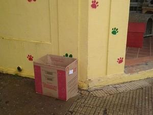 Câmeras flagraram pessoa deixando os animais no local em Tambaú (Foto: Giovana Uliana/ Arquivo Pessoal)