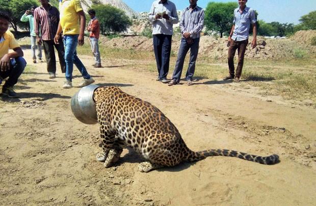 Na Índia, é comum animais selvagens se aproximarem de áreas habitadas (Foto: Kabir Jethi/AP)