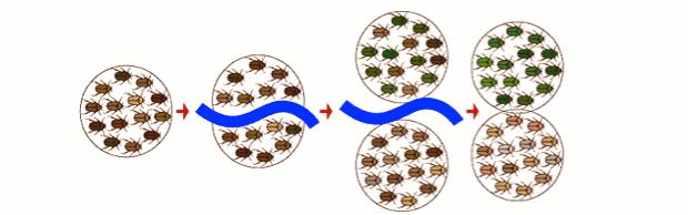 Exemplo de especiação alopátrica (Foto: USP)