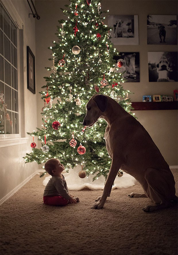 bebês e cachorros gigantes (Foto: reprodução)