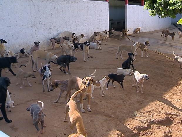 Cães em Bicas (Foto: Reprodução/TV Integração)