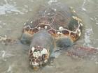 Em dois meses, 200 animais mortos são retirados das praias do Paraná
