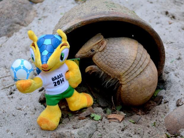Tatu-bola do zoo do Rio 'posa' ao lado do mascota da Copa, o Fuleco (Foto: Esther Nazareth/RioZoo)