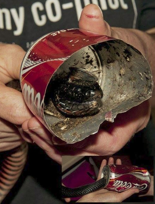 Cobra foi encontrada com cabeça entalada em lata  (Foto: Reprodução/Facebook/Wires)