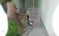 Gato é encontrado morto em armadilha em São João da Boa Vista (Márcia Andrade/ Arquivo Pessoal)