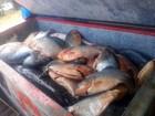 Fiscais apreendem 2,5 toneladas de pescado e multas somam R$ 236 mil