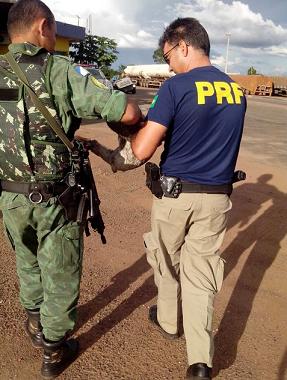Bicho-preguiça é resgatado após ser atropelado na BR-153, no norte do Tocantins (Foto: PRF Tocantins/Divulgação)