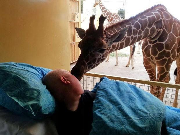 Girafa se aproxima de paciente com câncer terminal (Foto: Reprodução/Facebook/Stichting Ambulance Wens Nederland)