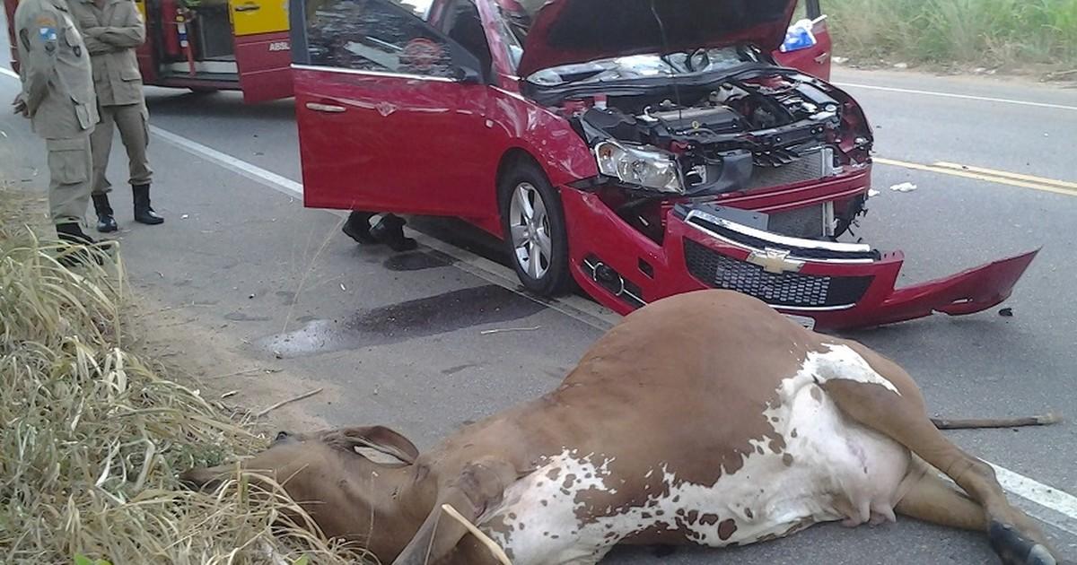 Motorista fica ferido ao atropelar vacas em São Fidélis, no Norte do RJ - Globo.com