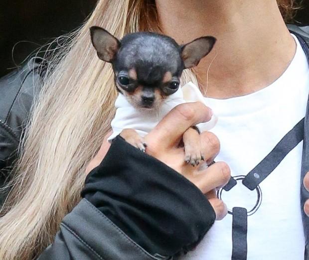 Cachorrinho de Paris Hilton (Foto: AKM-GSI)