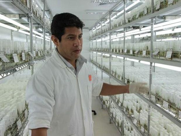 Laboratórios da CIP têm amostras de mais de 4 mil tipos de batata  (Foto: CIP/BBC)