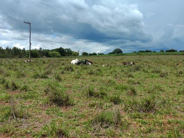 Cinco animais morreram  (Foto: Reprodução/TV Tem)