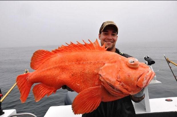 Eric Christopher Otte quebrou o recorde ao fisgar um peixe-rocha-vermelho de 18,46 quilos (Foto: Divulgação/IGFA)