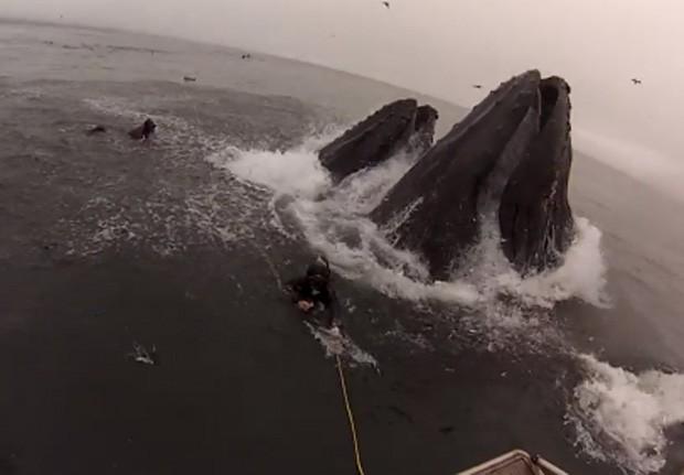 Ao subir para se alimentarem, baleias quase engoliram os mergulhadores junto com os peixes (Foto: YouTube/Reprodução/shawn stamback)