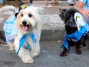 Alguns donos deixaram seus cães em clima de festa junina (Foto: Jonatas Oliveira/G1)