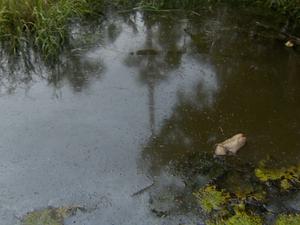 Segundo moradores, poluição iniciou na lagoa há nove meses (Foto: Reprodução/TV Amapá)
