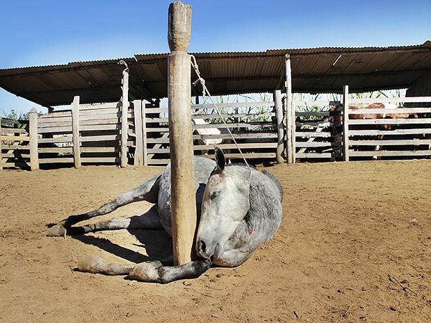 Égua avaliada em R$ 15 mil é enforcada em rancho em Barroso, MG (Foto: Bruno Ferreira/Barroso em Dia)