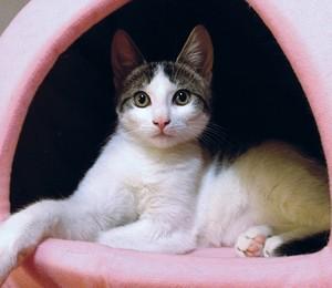 Problema costuma afetar gatos de pelo longo (Foto: Divulgação )