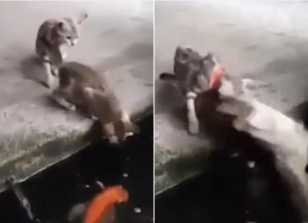 Vídeo impressionante mostra peixe saltando fora d'água e capturando gatinho (Foto: Reprodução/YouTube/NewsVideosHQ101)