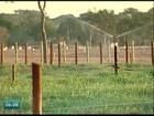 Produtores rurais são flagrados com irrigação irregular no Norte do ES