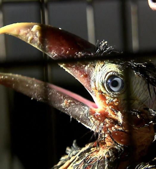 animais mortos e maltratados  (Rede Globo)