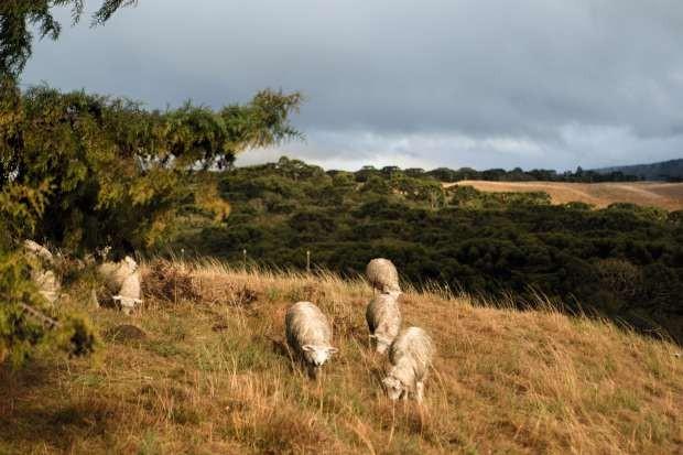 Estilo de vida no campo inspira arquiteta Inês Schertel. Propriedade em São Francisco de Paula, RS (Foto: Edu Castello)