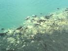 Branqueamento afeta 95% da região norte da Grande Barreira de Corais