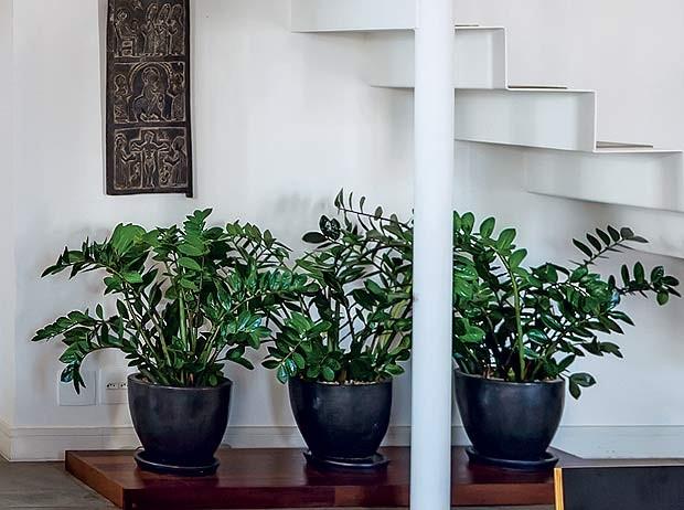 Projeto do arquiteto Max Gosslar vaso-zamioculca-escada (Foto: Edu Castello/Editora Globo)