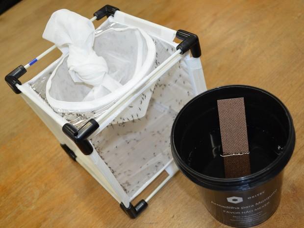 Armadilha para coleta de ovos de mosquitos do projeto Aedes do Bem em Piracicaba (Foto: Claudia Assencio/ G1)