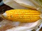 Aumentar o volume de grãos sem destruir a natureza é desafio em GO