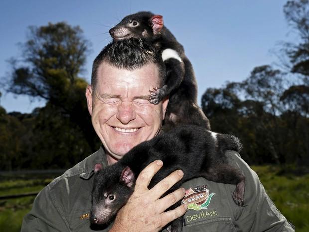 Filhotes de diabos-da-tasmânia escalam Dean Reid, gerente da Devil Ark, que prima pela conservação da espécie. A instituição soltou na natureza o maior grupo de diabos-da-tasmânia livres de um tipo de câncer que ameaçava a espécie de extinção (Foto: Jason Reed/Reuters)