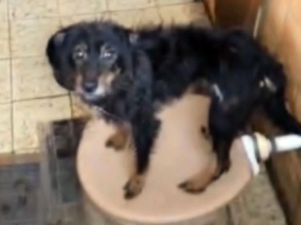 Cão localizado em residência do bairro Nova Europa, em Campinas (Foto: Reprodução EPTV)