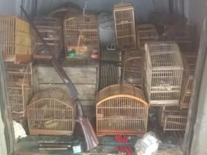 Pássaros estavam em cativeiros de duas residências (Foto: Paulo Veiga/ Inter TV)