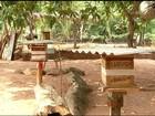 Produtor de abelhas nativas do Tocantins receberá prêmio no DF