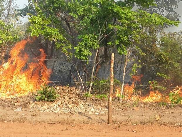 Incêndio atinge área entre as praias do Prata e do Caju, em Palmas (Foto: Rachel Lemos/TV Anhanguera)