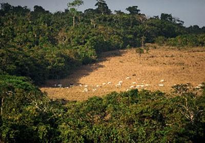 fazenda_sustentavel_cadastro (Foto: Ernesto de Souza/Ed. Globo)