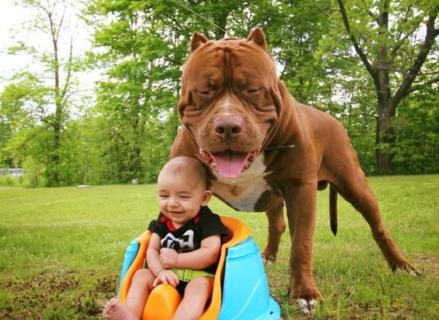O pitbull com o pequeno Jackson (Foto: Reprodução/ Facebook)