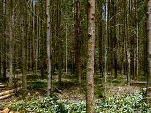 Produtores aumentam renda com eucalipto (Foto: Reprodução/ TV Integração)