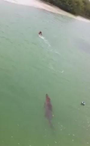 Vídeo mostra turista escapando de crocodilo em praia no México (Foto: Reprodução/Facebook/Manuel Carrera)