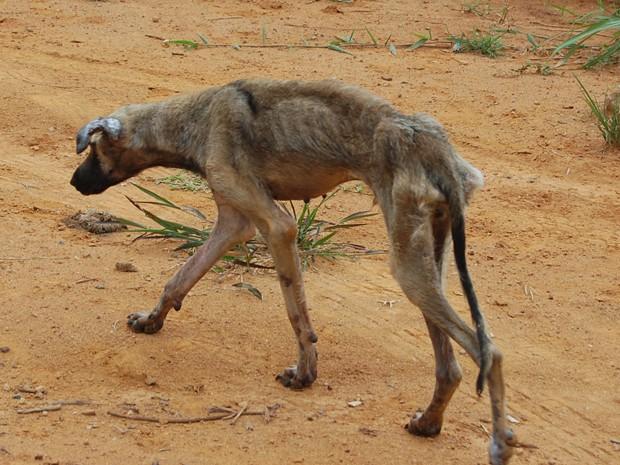 Cão é salvo de ser enterrado vivo em Registro, interior de SP (Foto: Márcia Colla/Arquivo Pessoal)