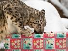 Animais comemoram Natal com presentes em zoológico nos EUA