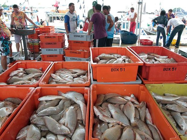 Mercado de Peixes de Macaé (Foto: Ana Chaffin/Divulgação)