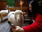 Mulher tira selfie com ovelha em café na Coreia do Sul