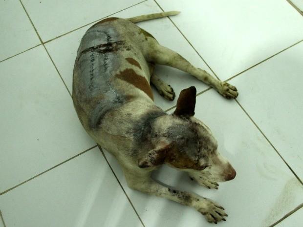 Cadela teve coluna afetada pelos golpes de facão (Foto: Indiara Bessa/G1 AM)
