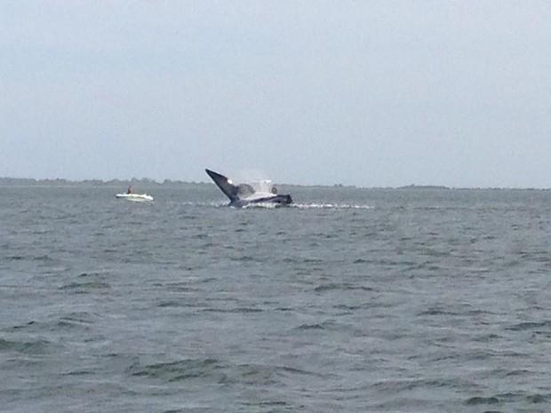 Baleia foi resgatada na tarde deste sábado (Foto: Gabriel Felipe/RBS TV)